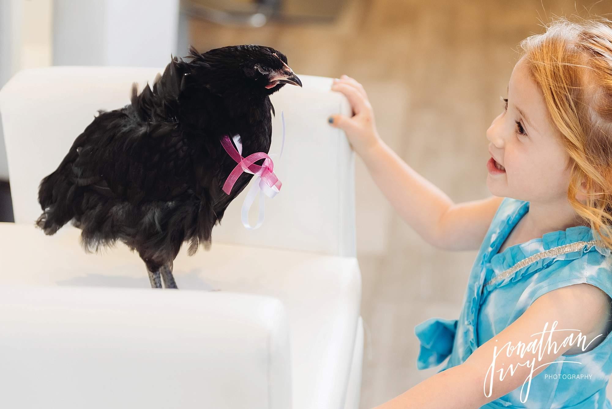 Chicken-goes-to-salon_0010.jpg