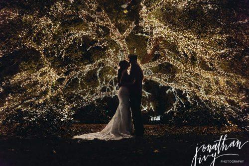 Houstonian Hotel Tree Christmas Lights